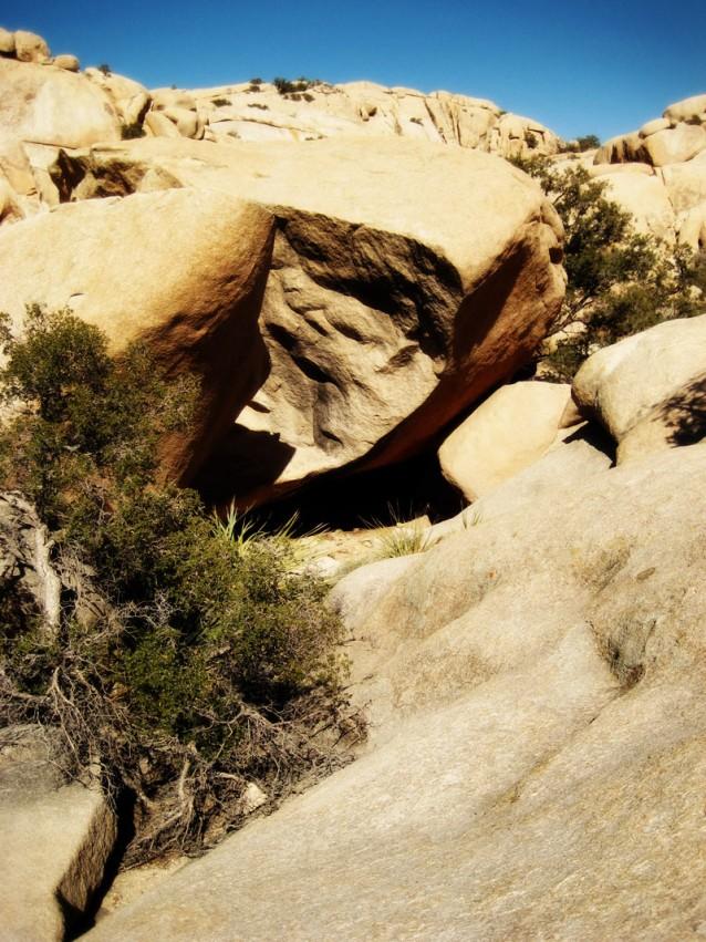 Split Boulder and Tree