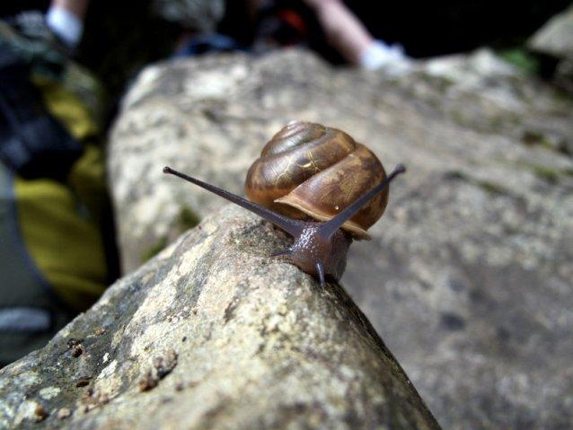 snail4.jpg